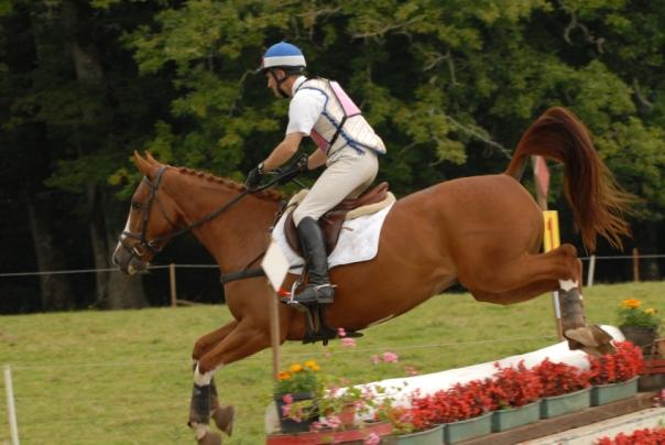 cheval et son cavalier sur un parcours de cross CCE